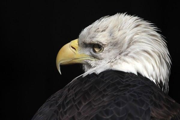 Группировка Blind Eagle крадет коммерческие тайны под видом киберполиции Колумбии