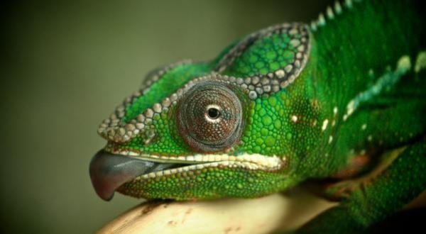Атака Chameleon позволяет менять контент в Facebook, Twitter и LinkedIn