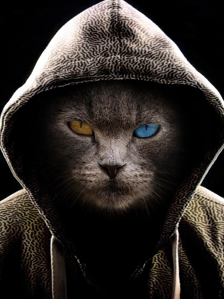 Виновником кибератаки на транспортную компанию Transnet оказался вымогатель Death Kitty