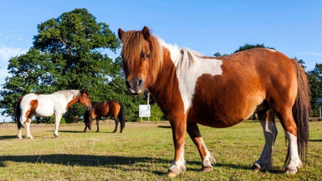 Эксперты предупредили о новых атаках с использованием вредоноса PonyFinal