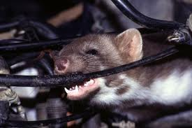 Группировка RATicate атаковала промышленные предприятия по всему миру